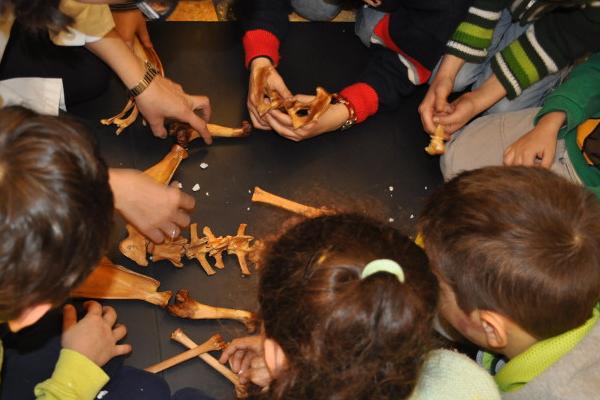scienzadivertente-museodizoologia