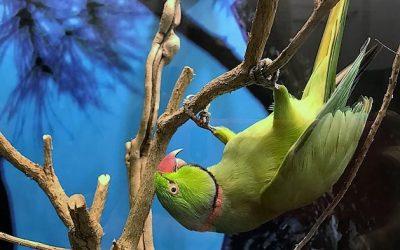 Nuova Mostra al Museo di Zoologia