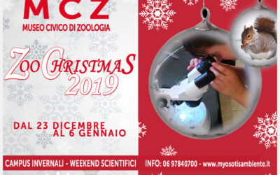 ZooChristmas 2019… NATALE al MUSEO!